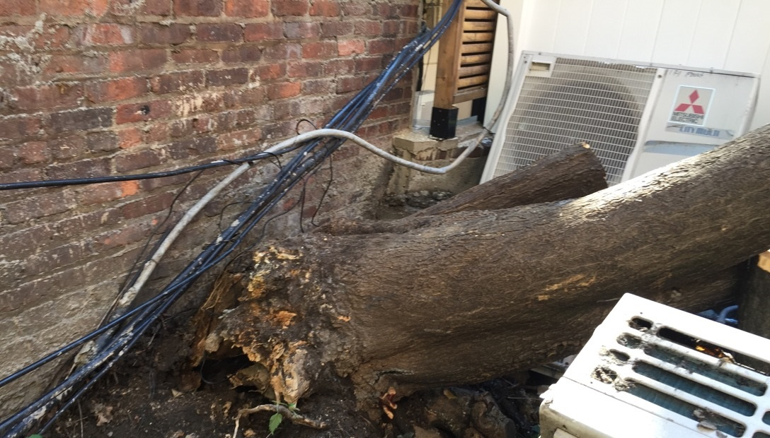 NYC Tree Removal