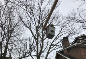 Manhattan Tree Service
